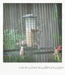 relatively squirrel-proof feeder-in-a-box