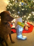 "....morph into a cute Christmas ""stocking"" for the baby. (Edie wants to know where HER stocking is!)"